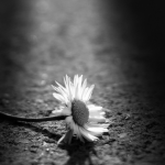Short Story: Like a Sunflower in the Rain by Victor Daniel
