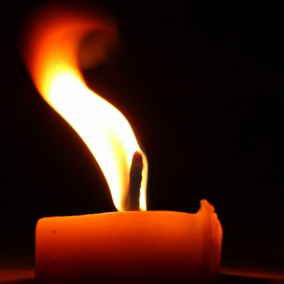 My candle-flicker has long hairs that prick & heal U.A Edwardson